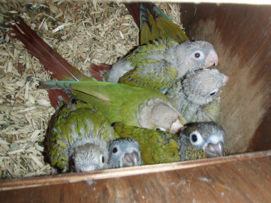 Breeding And Rearing
